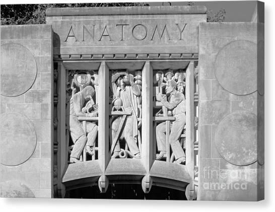 Indiana University Iu Canvas Print - Indiana University Myers Hall Anatomy by University Icons