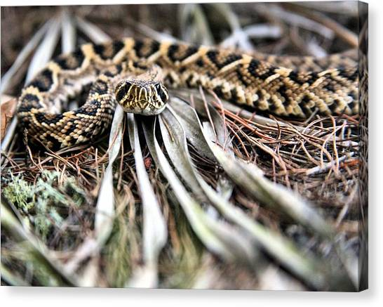 Poisonous Snakes Canvas Print - On His Level by JC Findley