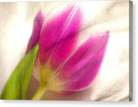 Linen Tulip Canvas Print by Bobbi Feasel