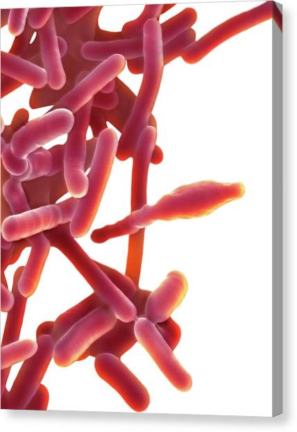 Abortion Canvas Print - Listeria Monocytogenes by Dennis Kunkel Microscopy/science Photo Library