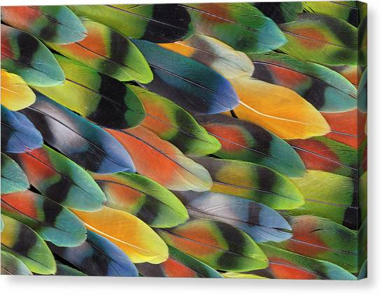 Lovebirds Canvas Print - Lovebird Tail Feather Pattern And Design by Darrell Gulin