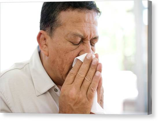 Man Sneezing Canvas Print by Ian Hooton/science Photo Library
