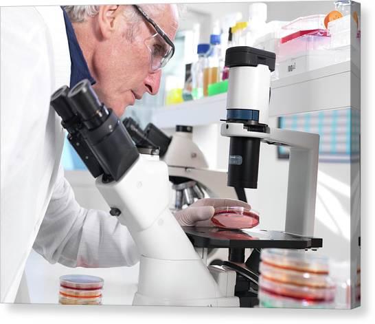 Biohazard Canvas Print - Microbiology Lab by Tek Image