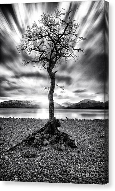 Ansel Adams Canvas Print - Millarochy Bay Tree Loch Lomond by John Farnan