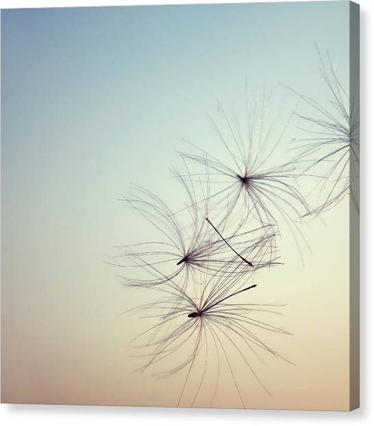 Nature Abstract Canvas Print by Sabina  Horvat