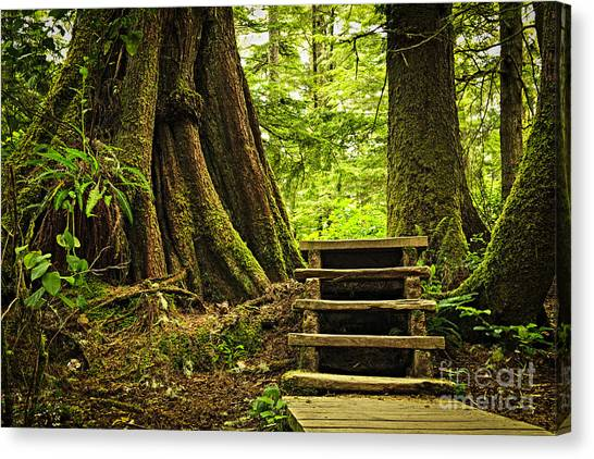 Rain Forest Canvas Print - Path In Temperate Rainforest by Elena Elisseeva