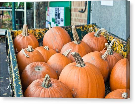 Pumpkin Patch Canvas Print - Pumpkins by Tom Gowanlock