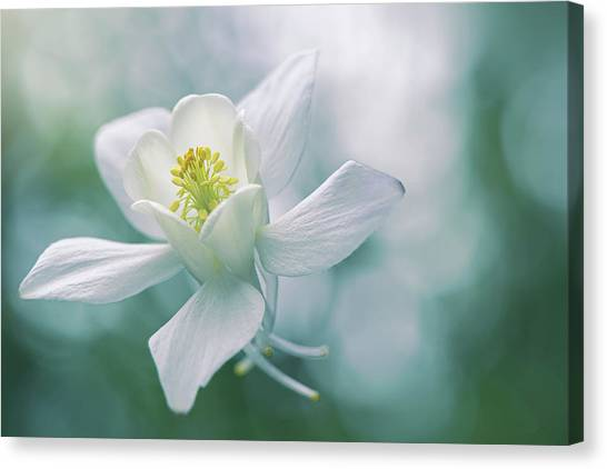 Turquoise Canvas Print - Purity by Jacky Parker