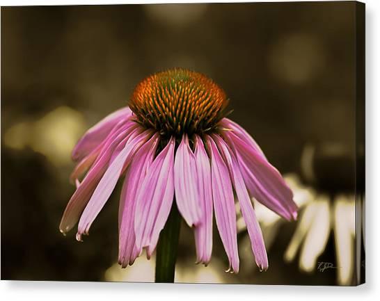 Purple Majesty Canvas Print