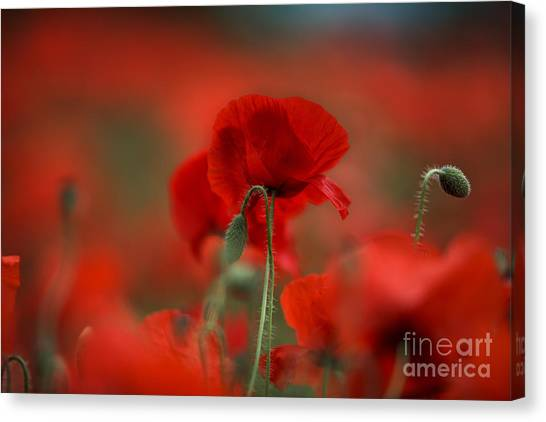 Fineart Canvas Print - Red by Nailia Schwarz