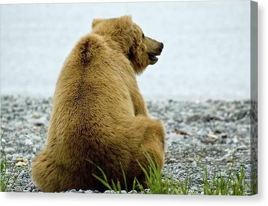 Resting Bear Canvas Print