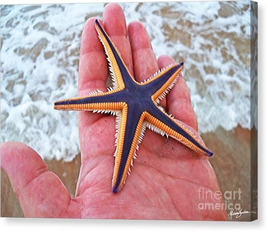Royal Starfish - Ormond Beach Florida Canvas Print by Melissa Sherbon
