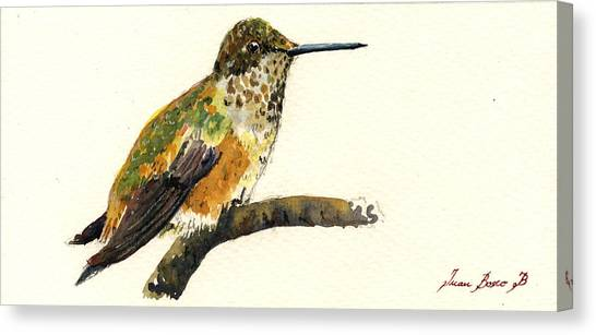 Hummingbirds Canvas Print - Rufous Hummingbird by Juan  Bosco