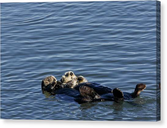 Sea Otters Canvas Print by Bob Gibbons/science Photo Library