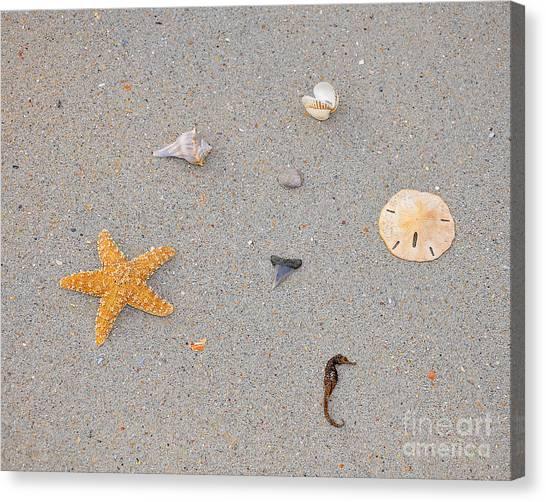 Shark Teeth Canvas Print - Sea Swag - Natural by Al Powell Photography USA