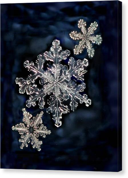 3 Snowflakes For The Price Of One Canvas Print