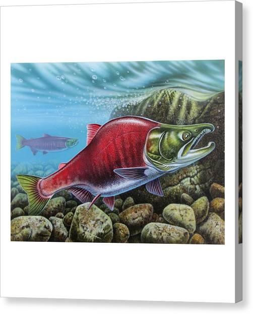 Salmon Canvas Print - Sockeye Salmon by JQ Licensing