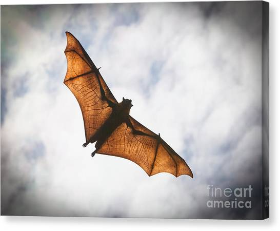 Spooky Bat Canvas Print