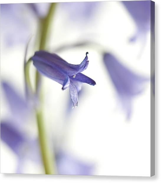 Soft Focus Canvas Print - Spring Bluebells by Carol Leigh
