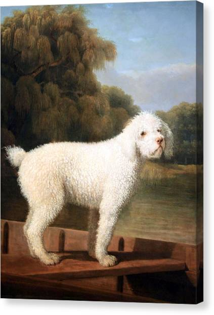 Stubbs' White Poodle In A Punt Canvas Print
