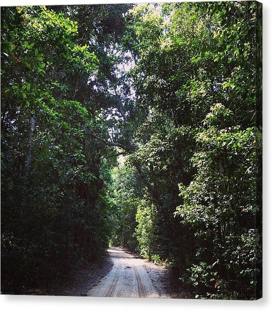 Offroading Canvas Print - The Only Other Place Rainforest Grows by Tony Keim