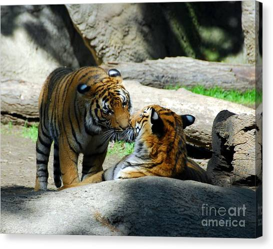Canvas Print featuring the photograph Tiger Love 2 by Mel Steinhauer