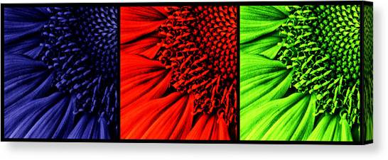 Sunflower Seeds Canvas Print - 3 Tile Sunflower Colors by Mark Kiver