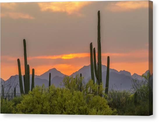 Desert Sunset Canvas Print - Usa, Arizona, Saguaro National Park by Jaynes Gallery