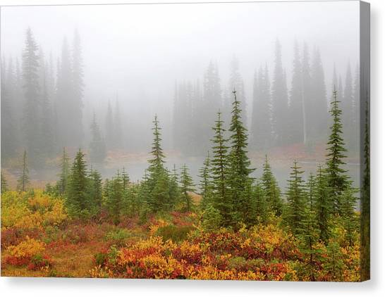 Foggy Forests Canvas Print - Usa, Washington, Mount Rainier National by Jaynes Gallery
