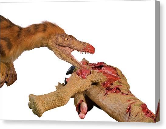 Velociraptor Canvas Print - Velociraptor Dinosaur Model by Natural History Museum, London/science Photo Library
