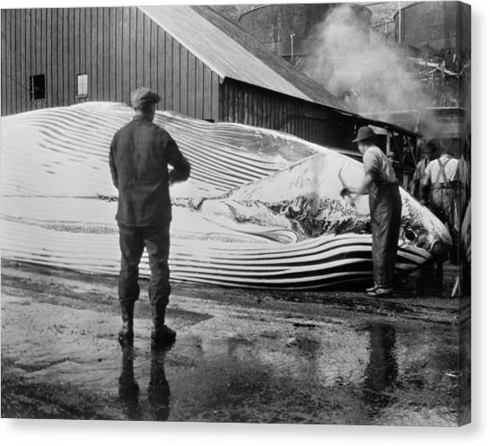 Whaling, C1935 Canvas Print by Granger