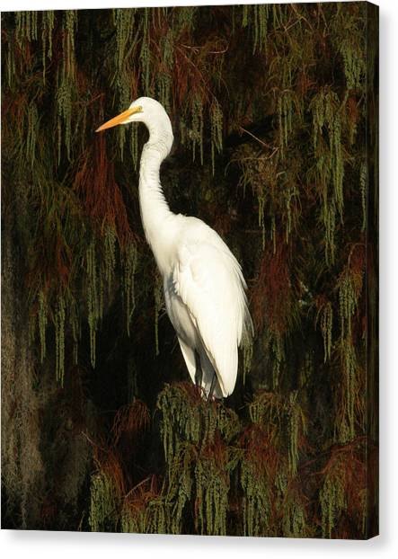 White Egret Canvas Print by Jeff Wright