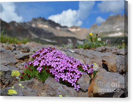 Canvas Print featuring the photograph Wildflowers by Kate Avery