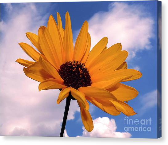 Yellow Flower Canvas Print by Elvira Ladocki