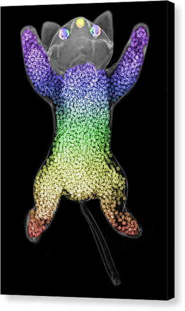 Stuffing Canvas Print - Beanie Baby Cat X-ray by Teresa Zgoda