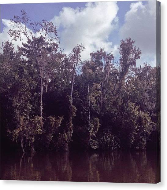 Bayous Canvas Print - Swamp by Alyson Von