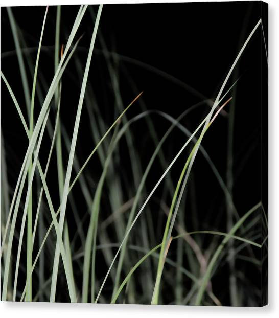 Blade Of Grass Canvas Print - Organic by Michael Banks