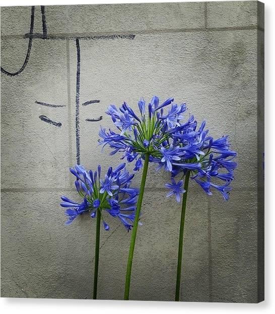 Graffiti Walls Canvas Print - Bloom by Stefanie  Campman