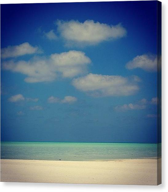 Hammerhead Sharks Canvas Print - Instagram Photo by Mike Fletcher