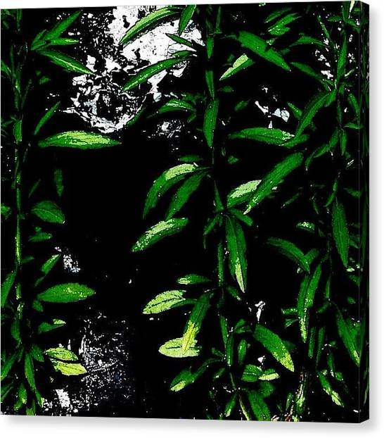 Abstract Canvas Print - Foliage  by Jason Michael Roust