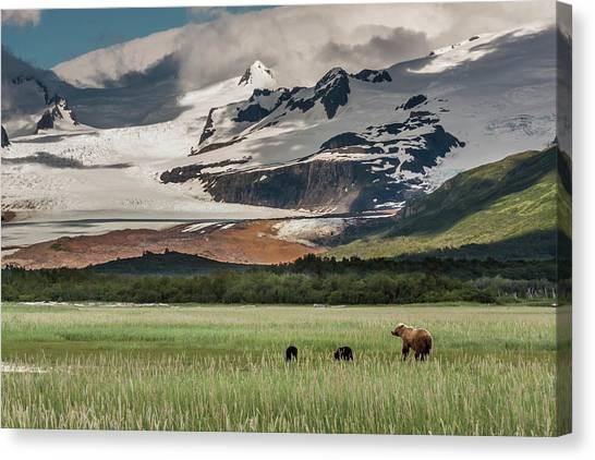 Glacier Bay Canvas Print - Usa, Alaska, Katmai National Park by Frank Zurey