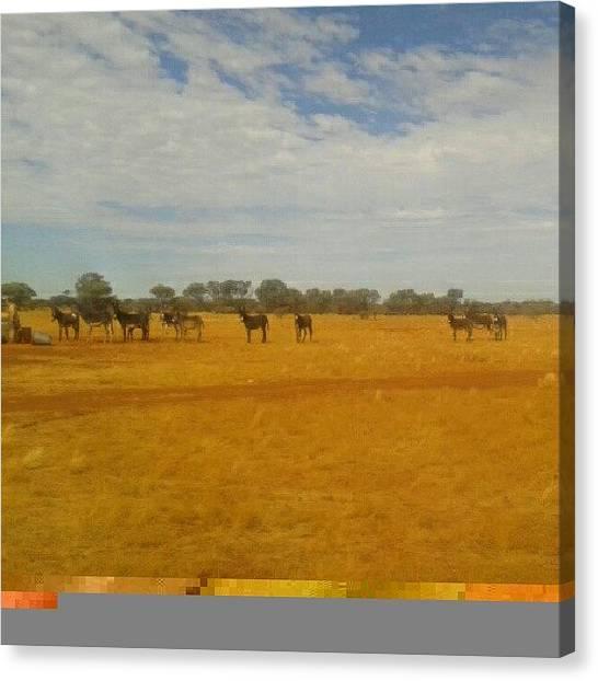 Donkeys Canvas Print - #sundays #loveasunburntcountry by Ragenangel -s