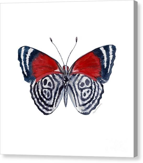 37 Diathria Clymena Butterfly Canvas Print