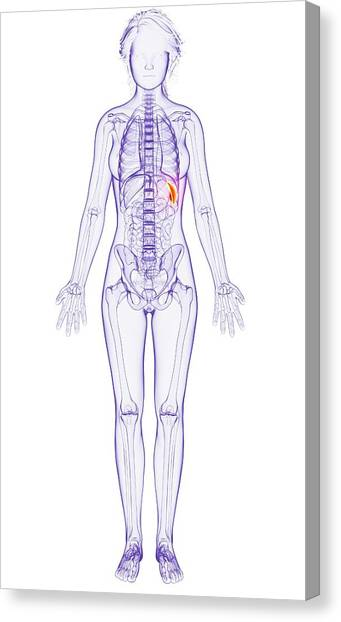 Skeleton Woman Canvas Prints Page 4 Of 51 Fine Art America