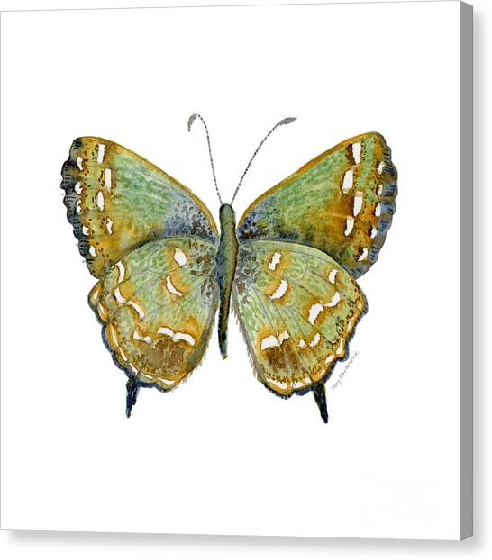 38 Hesseli Butterfly Canvas Print