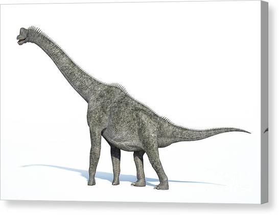 Brachiosaurus Canvas Print - 3d Rendering Of A Brachiosaurus by Leonello Calvetti