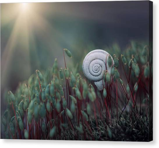 Spiral Canvas Print - ....@. by Dimitar Lazarov -