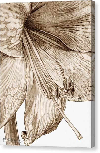 Canvas Print - Amaryllis by J McCombie