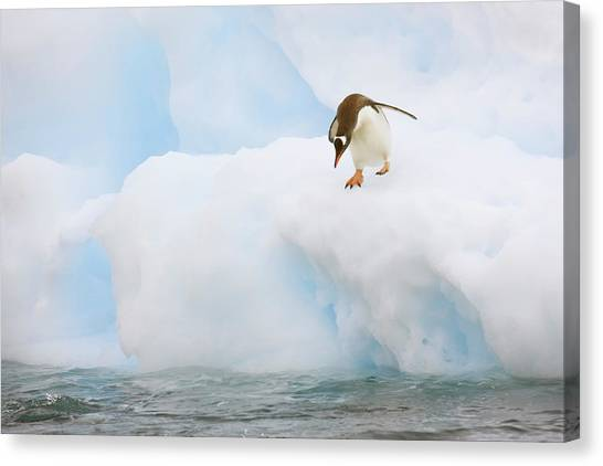Antarctica Canvas Print - Antarctica, Neko Harbor by Jaynes Gallery