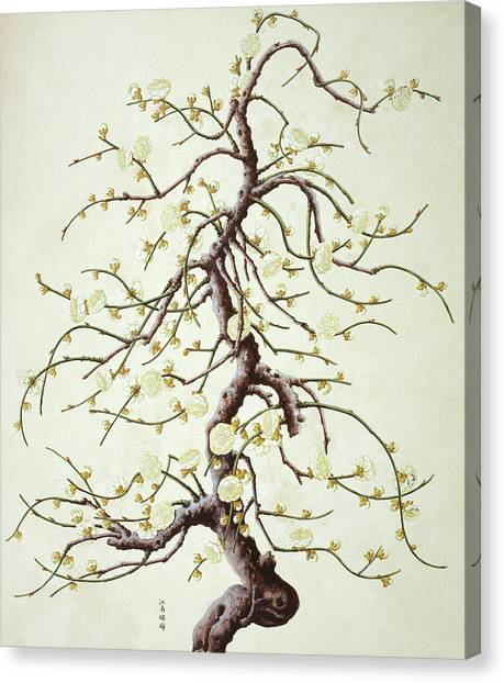 Botanical Illustration Canvas Print by Natural History Museum, London/science Photo Library